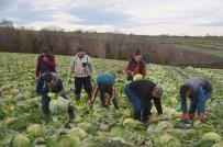 KARNABAHAR - Kışlık Sebze Üreticileri Raftaki Fiyatlardan Şikayetçi