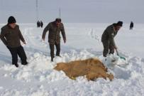 Muş'ta Yaban Hayvanları İçin Doğaya Yem Bırakıldı