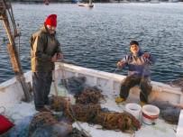 Palamut Gitti, Küçük Balıkçılar İçin Umutlar Bitti