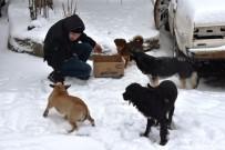 Tekirdağ'da Sokak Hayvanlarını Unutmadı