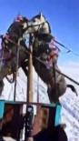 YABANCI TURİST - Buz Tutan Çıldır Gölünde Kızağa Takılı Atlar Kavga Etti