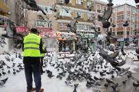 FATİH BELEDİYESİ - Fatih Belediyesi Sokak Hayvanlarını Yalnız Bırakmadı