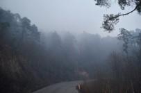 ORMAN YANGINI - Günün ağarmasıyla Trabzon'daki yangının boyutu ortaya çıktı