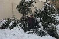 SEVINDIK - Mut'ta 20 Yıl Sonra Yağan Kar Zeytinleri Vurdu