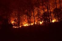 ORMAN YANGINI - Trabzon'da Büyük Orman Yangını