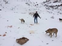 SOKAK HAYVANI - Vatandaşlar Sokak Hayvanlarını Unutmadı