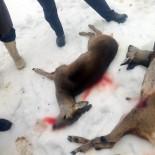 Yavru Karacaların Öldürülmesine Doğaseverlerden Tepki