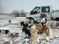FARUK YALÇIN HAYVANAT BAHÇESİ - 2016'Da Bin 10 Sokak Hayvanının Sıcak Yuvası Oldu