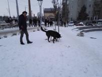AK Gençlerden Sokak Hayvanlarına Yardım