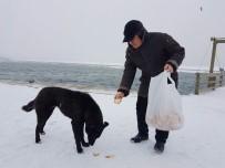 KIŞ LASTİĞİ - Büyükçekmece'nin Sokak Hayvanları Aç Kalmadı