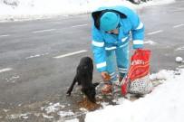 SOKAK KÖPEKLERİ - Çekmeköy'de Sokak Hayvanları Unutulmadı