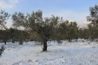 Kar Zeytinciyi Sevindirdi