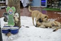 MALTEPE BELEDİYESİ - Maltepe'de Mama Verilen Köpeklerin Mutluluğu Kamerada