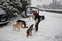 MALTEPE BELEDİYESİ - Mama Verilen Köpeklerin Mutluluğu Kamerada