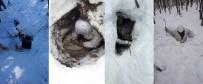 KOMANDO - Mehmetçik Kar Kış Dinlemiyor