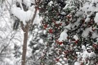 HAYVANLAR ALEMİ - Kocaeli'de Kar Yağışı Kartpostallık Fotoğraflar Oluşturdu