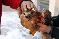 MALTEPE BELEDİYESİ - Soğuk Ve Yağışlı Hava Hayvanları Da Vurdu