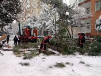 GÖZTEPE - Yoğun Kar Yağışı Nedeniyle Ağaç Devrildi