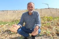 3 Bin 500 Yıllık Vadide Genetiği Bozulmamış Sebze Tohumlardan Ürün Elde Etti