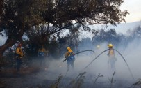 SAN FRANCISCO - ABD'de Orman Yangınları Açıklaması 10 Ölü