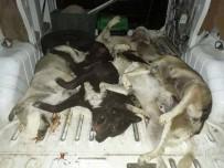 HAYVAN SEVERLER - Aydın'da Köpek Katliamı