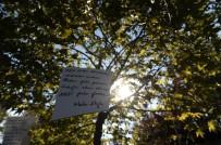 ŞİİR FESTİVALİ - Şiirin Kalbi Nilüfer'de Atacak