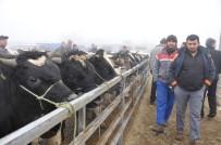 HAYVAN PAZARI - Trakya'nın En Büyük Hayvan Pazarı 1 Aydır Kapalı