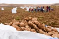 Ahlat'ta Patates Hasadı