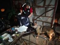 ÇEVİK KUVVET - İstanbul'da Narkotik Operasyonu