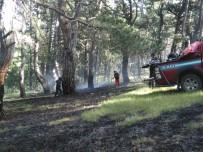Kargı'da Orman Yangını