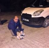 YAVRU KÖPEK - Yaralı Köpek Kurtarıldı