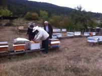 EYLEM PLANI - Zonguldak, Karabük Ve Bartın'da Tesis Edilen 11 Adet Bal Ormanı Arıcıların Yüzünü Güldürüyor