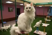 ARAŞTIRMA MERKEZİ - En güzel Van Kedisi seçildi