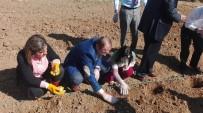 LALE SOĞANI - Kovancılar'da Ters Lale Soğanı Ekildi