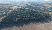 HARAMILER - Tekkeköy'e 'Masal Ormanı'