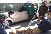İLK MÜDAHALE - Bismil Belediyesi Sokak Köpeklerine Sahip Çıkıyor