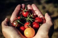 SÜPERMARKET - Deniz Ataç Açıklaması 'Gıda Güvencesi Toprakları Korumakla Başlar'