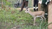 KARANTINA - Doğal Yaşam Parkı'nın Nüfusu Artıyor