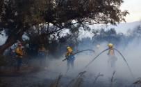 ORMAN YANGINI - Kaliforniya'da Ölü Sayısı Artıyor