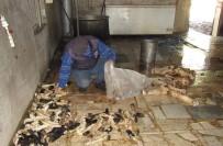 Merdivenaltı Süt Ürünleri Ve Sakatatlar Belediye Denetimine Takıldı