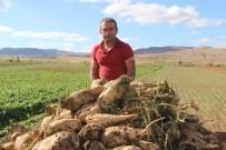 YAZ MEVSİMİ - Sivas'ta Şeker Pancarı Hasadı Başladı