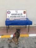 HAKKARI VALILIĞI - Üzerlerinden Koli Bandıyla Sarılmış Eroin Çıktı