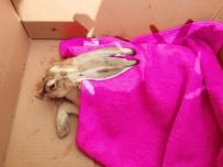 İLK MÜDAHALE - Yaralı Tavşana İlk Müdahale Aile Sağlığı Merkezinde Yapıldı