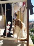 Yaramaz Köpeğin İmdadına İtfaiye Yetişti