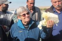 Canan Karatay'dan Lahana Turşusu Açıklaması