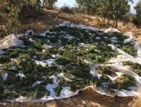 Diyarbakır'daki operasyonlarda 1 ton esrar ele geçirildi