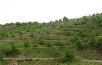 Ordu'da Orman Köylüsüne Destek