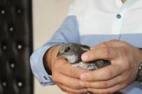 FARUK ÖZDEMIR - (Özel Haber ) Güngören'de Yaralı Ebabil Kuşu Bulundu
