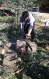 Zeytin Fiyatlarına Tepkisini Ağaçlarını Keserek Gösterdi