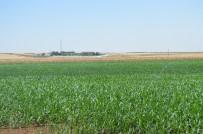 GÜNEYDOĞU ANADOLU - Çiftçi İthal Ürün İstemiyor